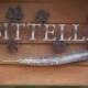 Sittella Winery as wedding venue
